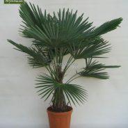 My Palm Shop